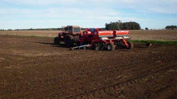 Esperan que se siembren más de 520.000 hectáreas con trigo en Entre Ríos