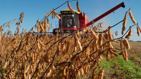 El precio de la soja acumula varias bajas consecutivas: a qué se debe