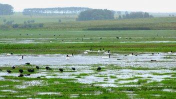 Delta del Paraná: Piden a la Corte Suprema que lo declare