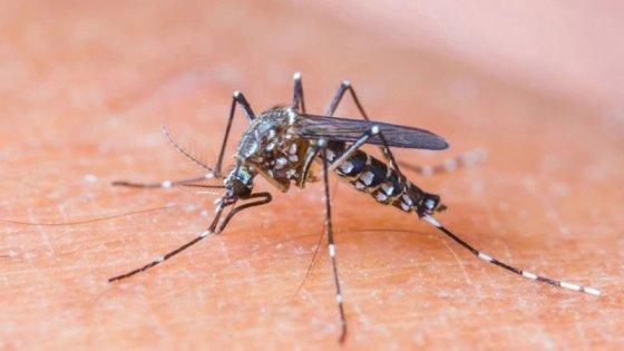Confirman la segunda víctima mortal por dengue en lo que va del año