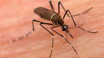 Dengue: Se estudian dos nuevos posibles contagios en Gualeguaychú