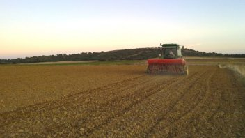 Se redujo la intención de siembra de trigo en Argentina