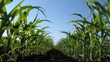 Entre Ríos lidera el ranking de siembra de cultivos de servicio
