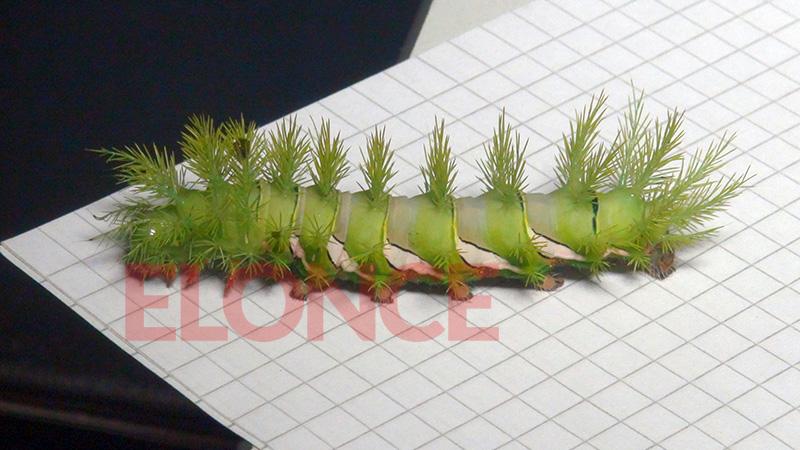 gusano blanco con pelos verdes