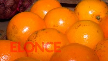 Destacan la salud fitosanitaria y la calidad de cítricos entrerrianos