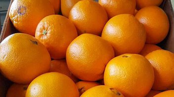 El precio final de las naranjas es 12 veces más de lo que recibe el productor