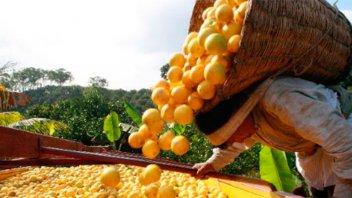 El gobierno promulgó la prórroga por un año de la emergencia citrícola