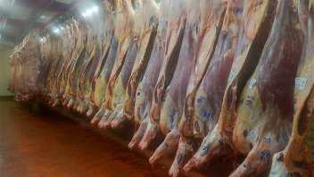 Gremio de la carne garantizó el funcionamiento normal de frigoríficos