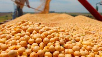 La soja mantiene la tendencia alcista: La tonelada supera los 25.000 pesos