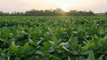Estiman que caerá la producción entrerriana de soja