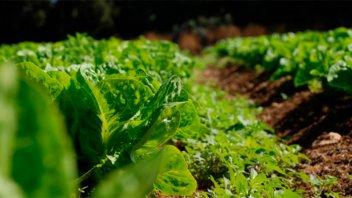 Proponen incentivos para el desarrollo de la producción agroecológica
