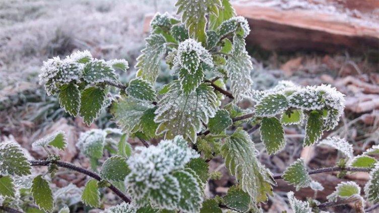 Intenso frío polar llegará a Entre Ríos: Anuncian un fin de semana gélido
