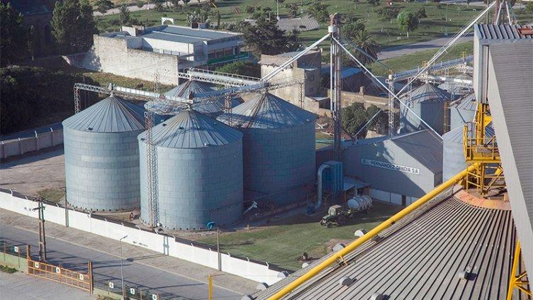 Qué medidas evalúa el gobierno para que los productores vendan más granos