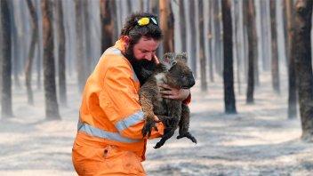 Más de 1.000 millones de animales murieron en Australia por incendios forestales