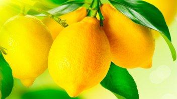 Frutas: Piden extremar el cuidado de los trabajadores ante el coronavirus