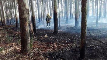 Bomberos de Villa del Rosario combatieron cinco incendios forestales