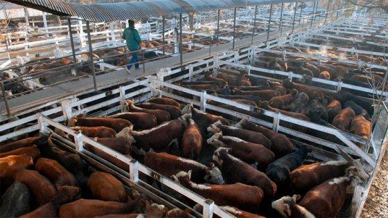 Ganaderos van al paro: anuncian cese de comercialización de hacienda por 9 días