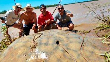 Video: Pescaron una enorme raya de 160 kilos y la devolvieron al río