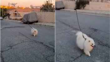Creativa solución de dos abuelas para pasear al perro sin romper la cuarentena