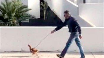 Video: Sacó a pasear a la gallina durante la cuarentena y quedó detenido