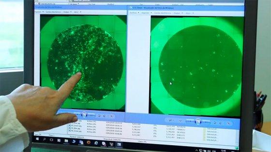 Los asintomáticos contagian el coronavirus: Otro de los misterios de la pandemia