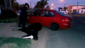 Un auto embistió a un carro a tracción a sangre y la yegua murió