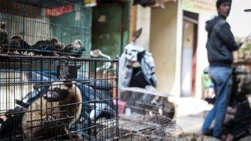 Coronavirus: ONU pide prohibir los mercados de animales en todo el mundo