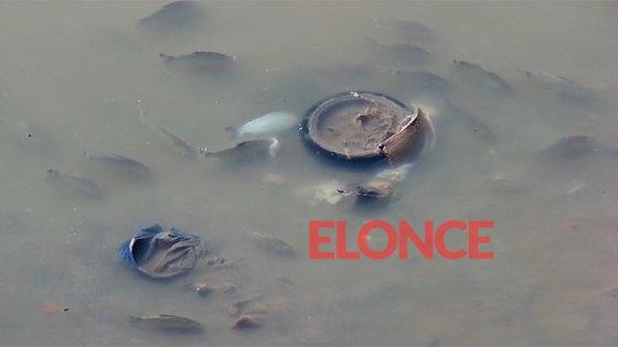 Video: Grabaron a un cardumen en la costa del balneario Thompson