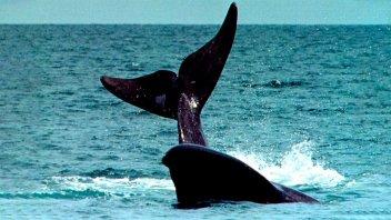 Video: Ballenas reaparecieron en Francia tras la suspensión del tráfico marítimo
