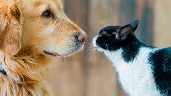China declaró que ahora los perros y gatos son compañeros y no deben comerse