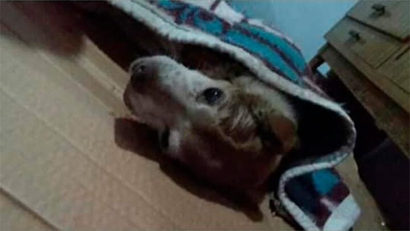 Casos de inusitada crueldad animal conmueven a vecinos de Nogoyá