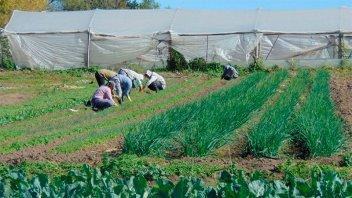Realizarán mejoras en Parque Hortícola para sumar ocho hectáreas a la producción