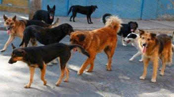 Perros atacaron a su madre en la calle y pide intervención de autoridades