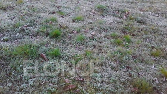 Siguen las heladas y pronostican frío más intenso para los próximos días