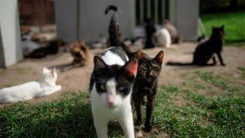Deberá pagar 300.000 pesos por matar a tiros a los gatos de sus vecinos