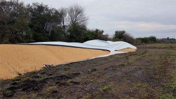 Silobolsa cortado: Se perdieron 47 toneladas de soja