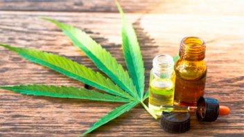 Cannabis medicinal: Presentaron proyecto de ley con enfoque integral
