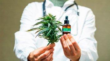 Gobierno presentará proyecto para desarrollo de industria de cannabis medicinal