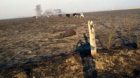 Falta de lluvias se acentúa: En zonas de Argentina la primavera sería más seca