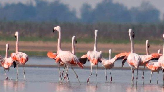 Fotografiaron a los flamencos en paraje la costa oeste de la laguna Setúbal