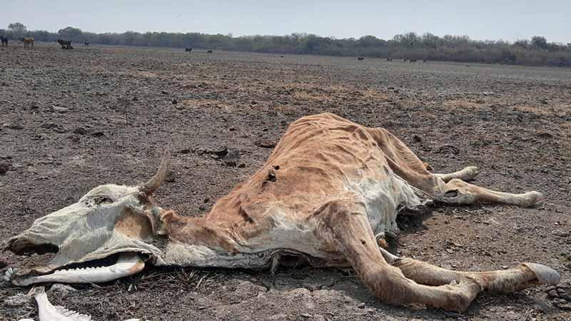 La sequía más intensa en 20 años, según especialistas.-