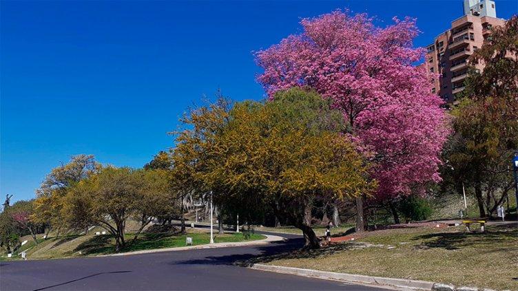 Empieza la primavera y pronostican temperaturas de verano para esta semana