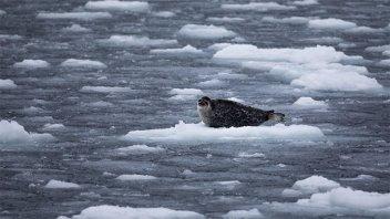 El hielo ártico se está derritiendo dos veces más rápido de lo previsto