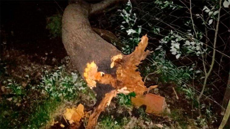 Fuerte tormenta causó caída de árboles y otros daños en zonas de Entre Ríos