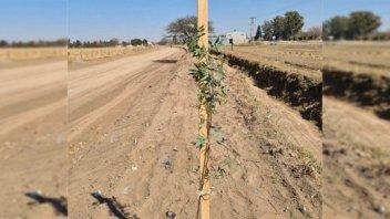 Proponen forestar las márgenes de las rutas provinciales con especies nativas