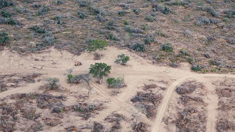 Deforestación en el norte de Argentina