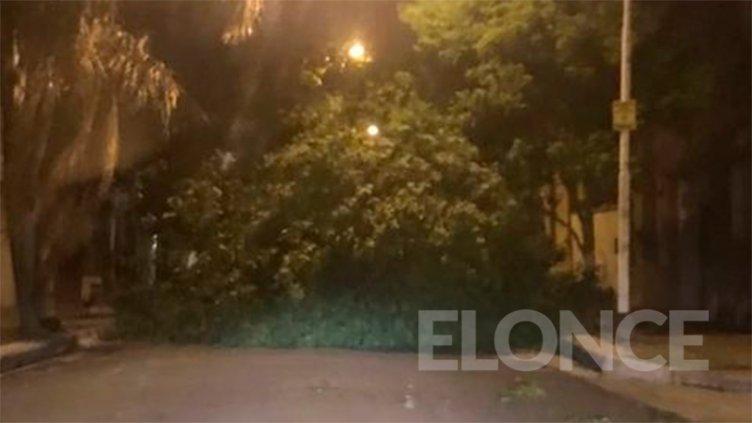 Hubo caída de árboles y viviendas anegadas: La Municipalidad asistió a familias