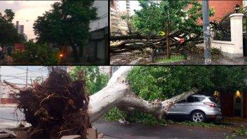 Importantes destrozos en ciudad de Santa Fe por el temporal: Fotos y videos
