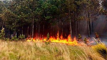 Hay incendios forestales que siguen con
