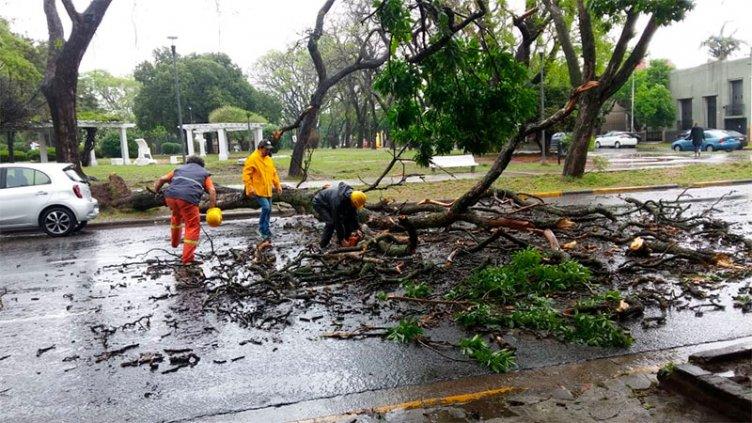 Tras la tormenta, Defensa Civil reportó caída de árboles y asistió a familias